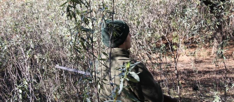 ¿Necesitas obtener la licencia de caza? ASAJA-Sevilla ha organizado un curso online que podrás realizar a…