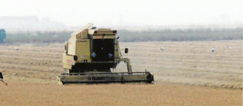 El FEGA fija el importe unitario provisional de la ayuda asociada al arroz en 142,46 €/ha