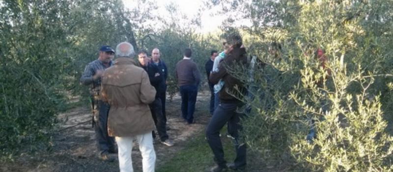 Nuevos cursos de aplicador de fitosanitarios, poda del olivo, bienestar animal en el transporte y control…