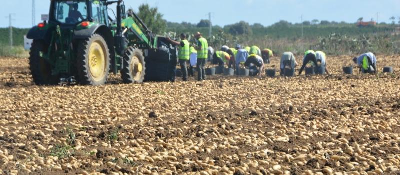 El Gobierno asesta otro duro golpe al sector agrario con la subida del SMI