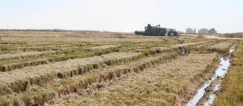 Autorización provisional para el control de piricularia y helmintosporium en producción integrada de arroz