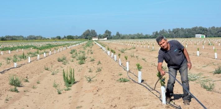 El regadío eficiente en España supone ya un 77 % de la superficie total de riego