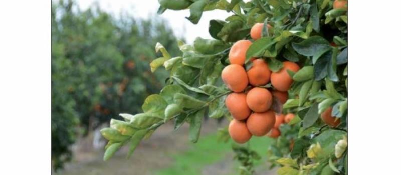 ¡Ponte al día de la actualidad agraria y ganadera con nuestra revista Tierra y Vida!