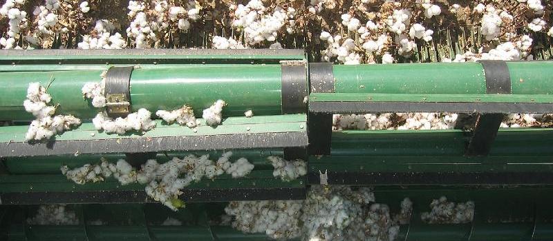 La incidencia de plagas reducirá la producción de algodón a 180.000 toneladas en la próxima campaña