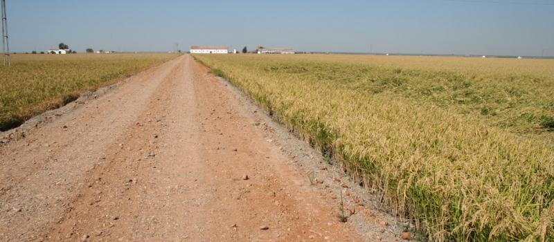Andalucía propone al Ministerio formar una alianza en defensa de una PAC fuerte