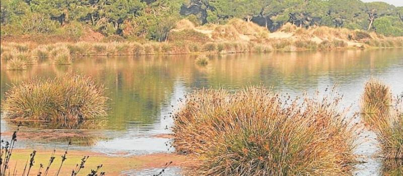 La protección del acuífero de Doñana deja en vilo el riego de 23.000 hectáreas en Sevilla