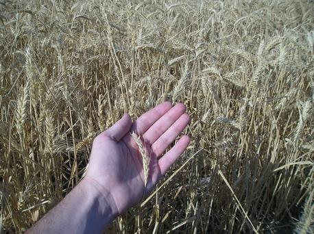 ¿Sabes cuánto ha cobrado el agricultor por sus productos en la última semana? ¿Cuánto has pagado…