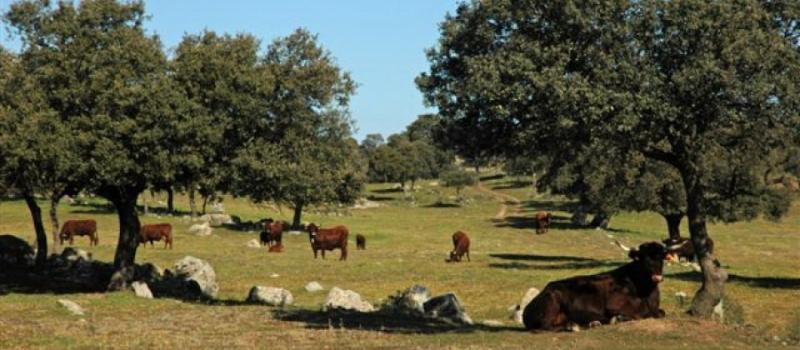 Las ayudas forestales priman el plan de ordenación