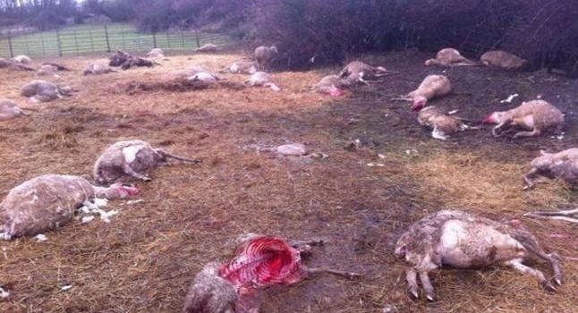 """Las organizaciones agrarias anuncian movilizaciones ante el """"desprecio"""" a los ganaderos por parte del Gobierno"""