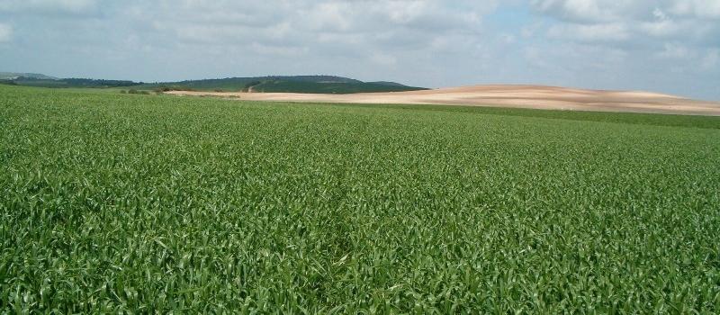 Autorización provisional contra oidio y mal de pie en cereales de invierno