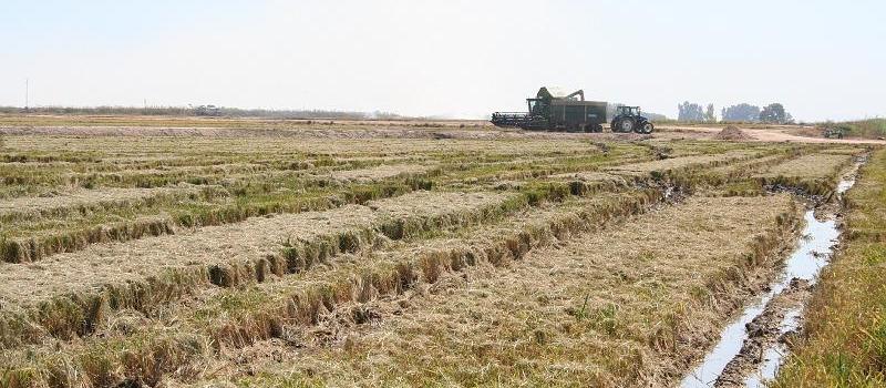 Autorización excepcional a partir del 15 de enero para el tratamiento fungicida de la semilla de…