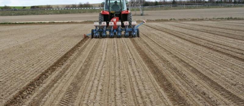Recomendaciones para la siembra de remolacha azucarera
