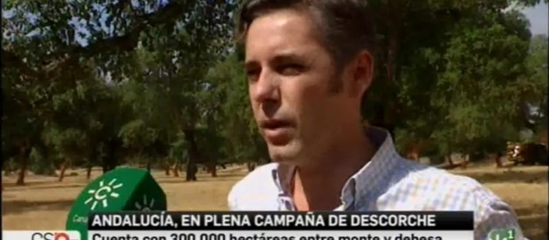 Andalucía, en plena campaña de descorche