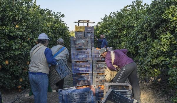 Novedades a fecha 26 de marzo en la normativa COVID en Andalucía que afectan a los…