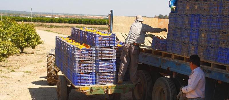 Aclaradas las dudas sobre el desplazamiento de los trabajadores del campo: Nueva Orden que establece condiciones…