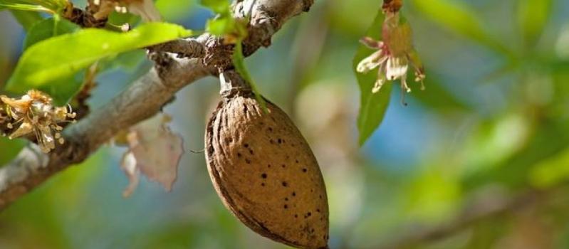 El FEGA fija en 26,75 €/ha el importe provisional de la ayuda asociada a los frutos…