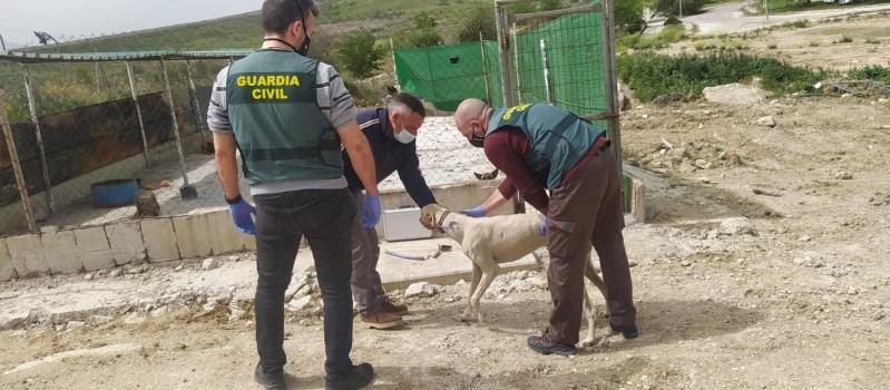 La Guardia Civil detiene al cabecilla de un grupo criminal dedicado al robo en explotaciones agrícolas…
