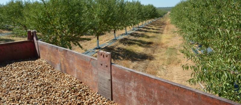 Andalucía puede alcanzar una producción de 29.800 toneladas de almendra en la campaña 2020