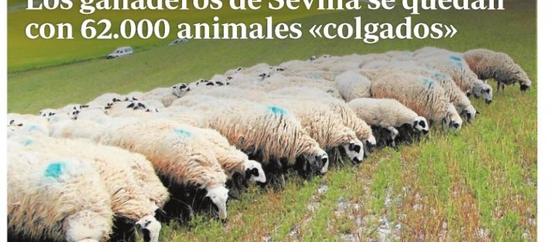 Los ganaderos de Sevilla se quedan con 62.000 animales «colgados»