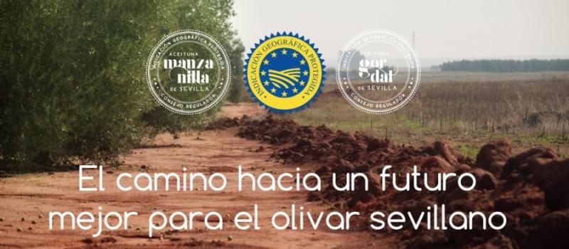 Ya puedes formar parte del Consejo Regulador de la IGP Aceituna Manzanilla y Gordal de Sevilla