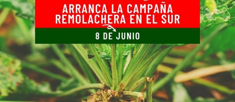 Azucarera inicia la campaña remolachera en Andalucía el próximo lunes, 8 de junio
