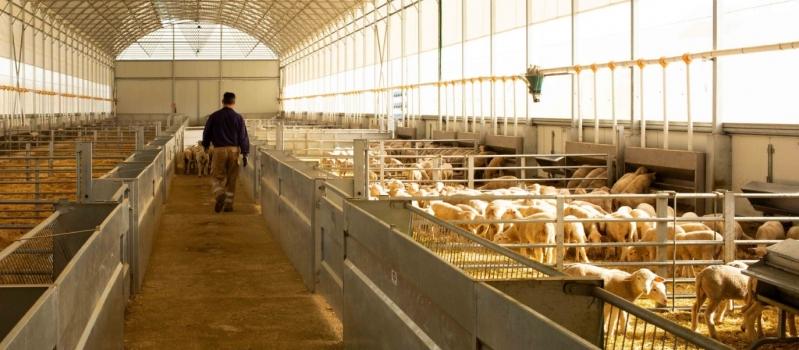 CorSevilla obtiene el primer sello de Bienestar Animal Interovic España