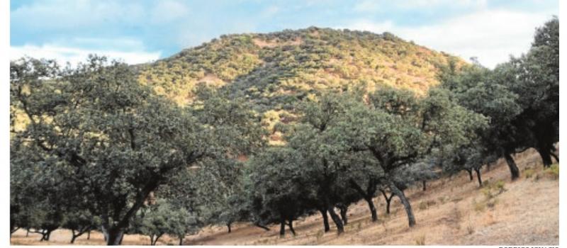Más de cien millones para el monte andaluz, bloqueados