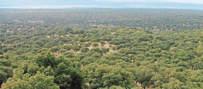 Ampliado el período de alto riesgo de incendios forestales hasta el 31 de octubre