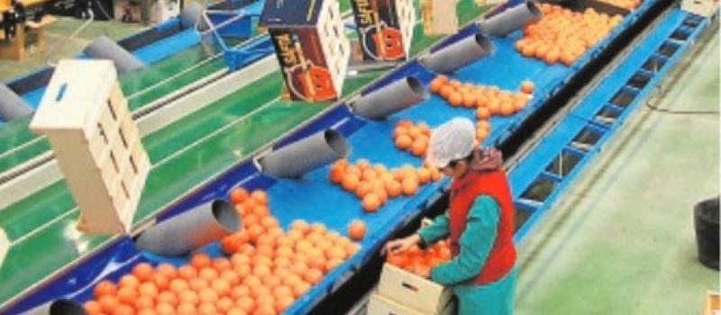 El precio de salida de la naranja es un 40% superior al de 2018