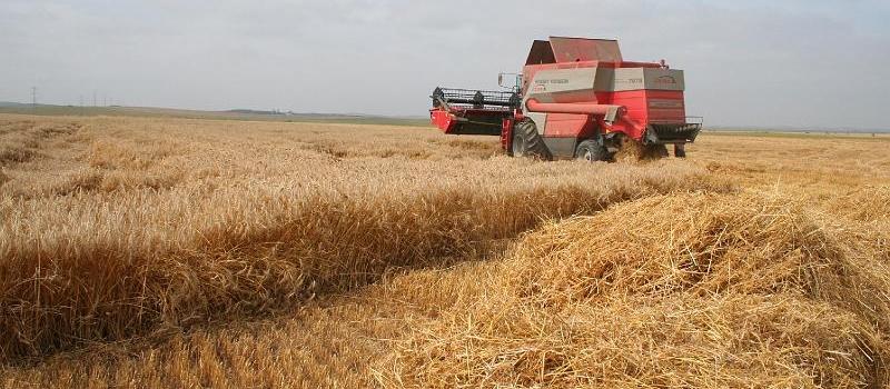 Andalucía inicia la recolección de trigo duro con buenas previsiones para esta campaña