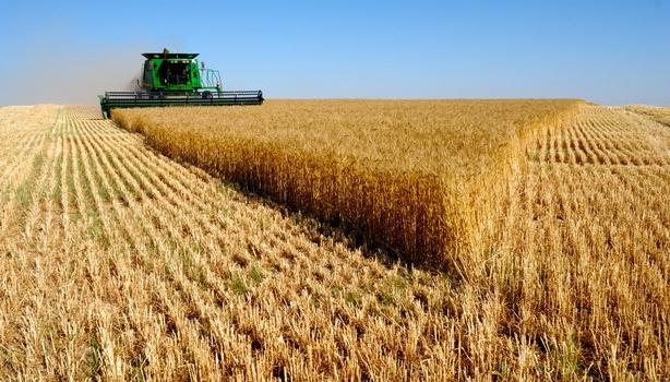 La agricultura, ganadería, pesca, industria alimentaria y sus actividades relacionadas son servicios esenciales