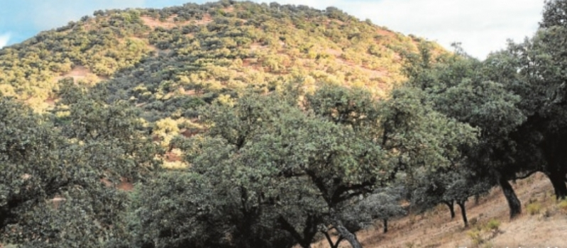 Ayudas forestales: La Junta paga hasta siete veces más si se externalizan podas, desbroces o clareos